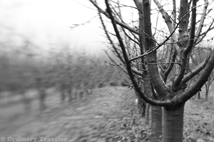 Lensbaby Double Glass Optic - Apple Orchards