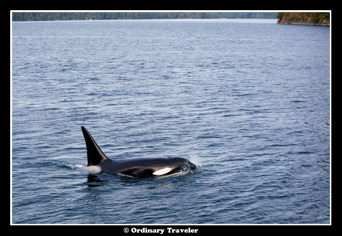 Whale Watching in Southeast Alaska with Un-Cruise Adventures