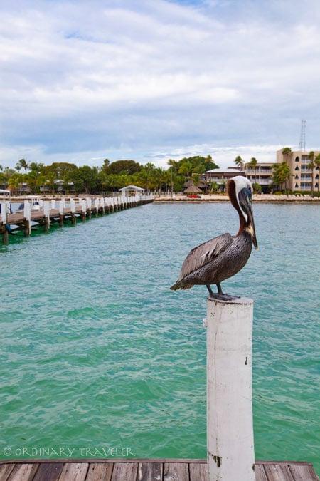 Cheeca Lodge - Islamorada, Florida Keys