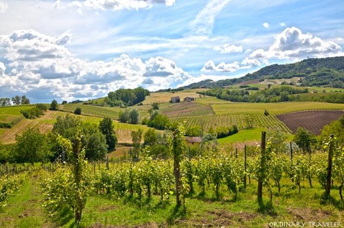 Vineyards in Ziano Piacentino - Emilia Romagna, Italy
