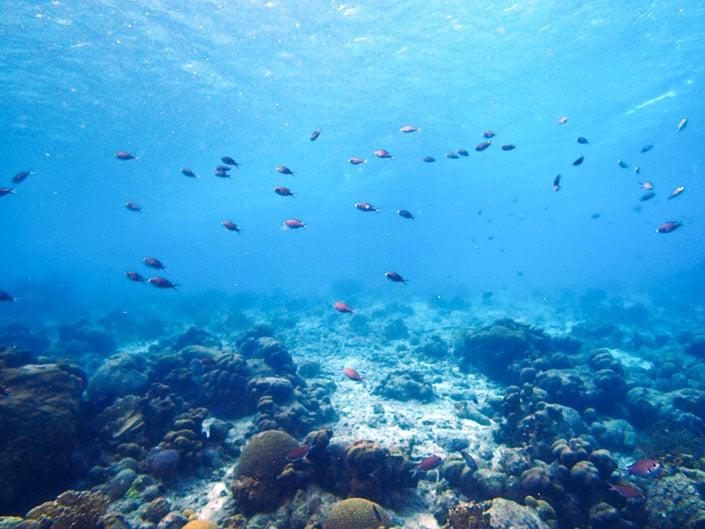 Diving in Bonaire, Caribbean