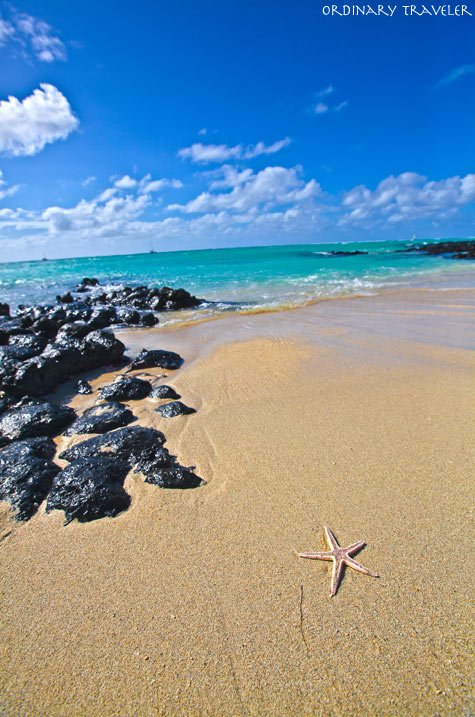 Starfish at Ile aux Cerfs in Mauritius
