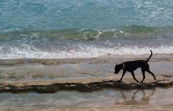 Encuentro Beach, Dominican Republic
