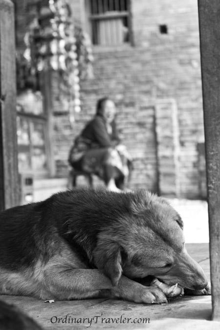 Bhaktapur, Nepal - Dog