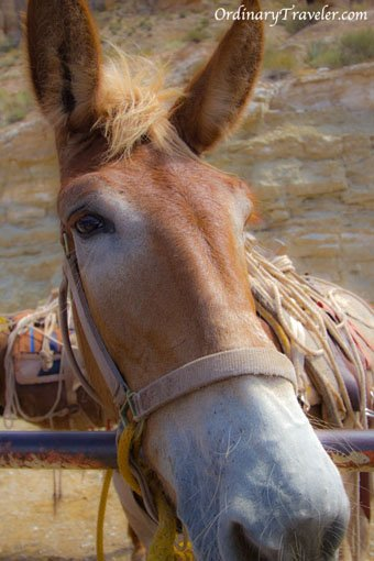 Pack Horse - Havasupai Reservation, Arizona