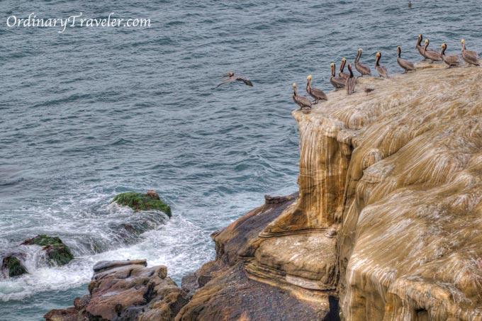 La Jolla Cove Wildlife Photos - San Diego