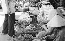 Hoi An, Vietnam Street Market