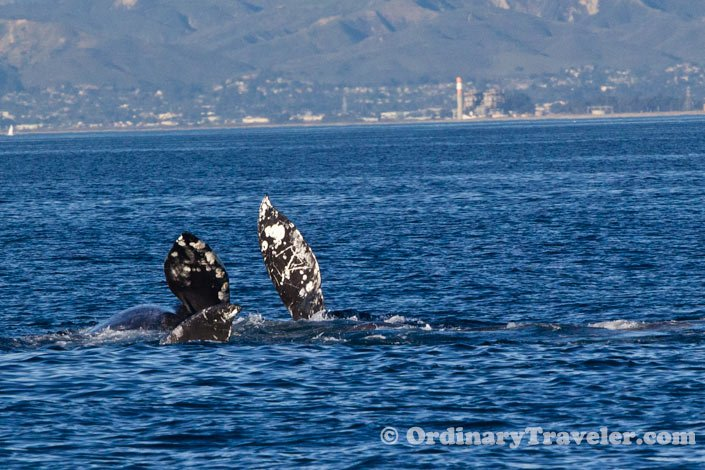 Whale Watching - Channel Islands National Park