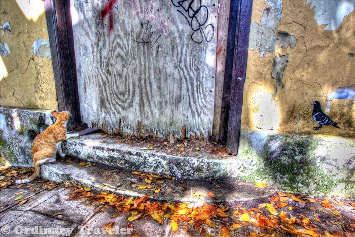 Photogenic Puerto Rico: A Photo Journey Through San Juan