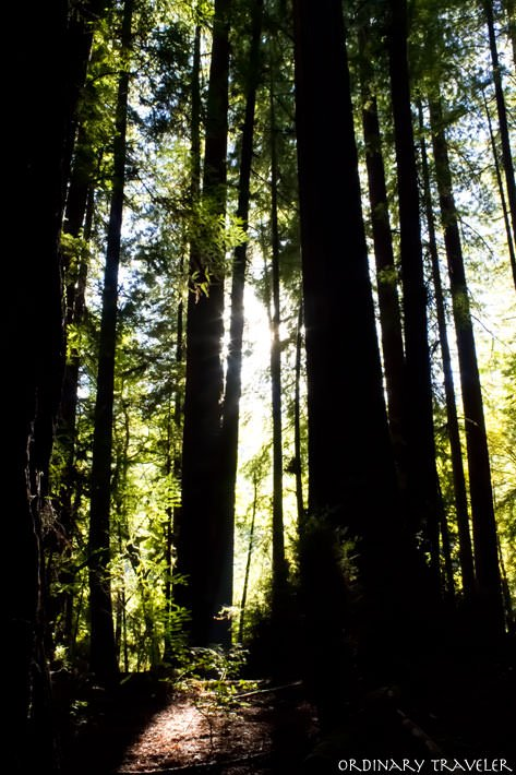 Humboldt County State Park Avenue of the Giants