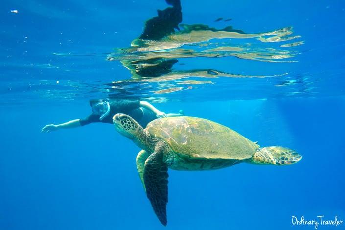 Snorkeling Green Sea Turtle Maui