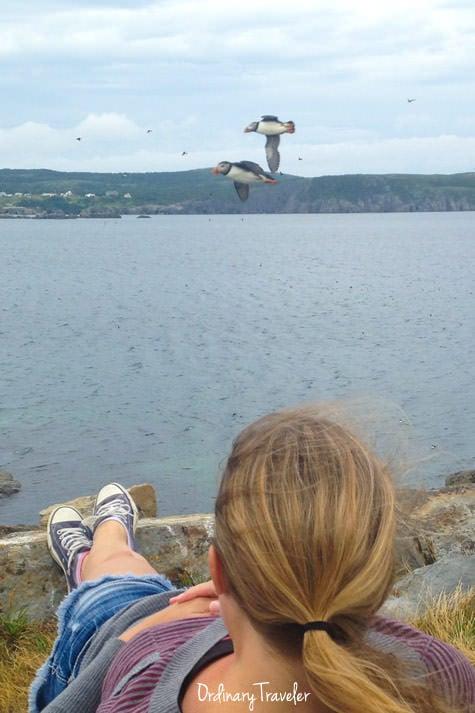 best travel experiences newfoundland puffins