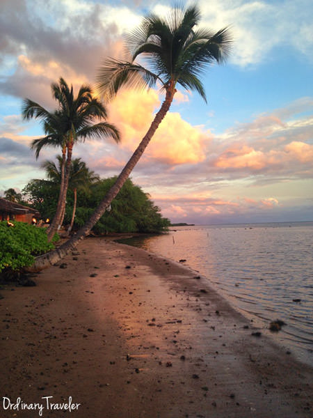 Hotel Molokai Palm Tree Beach Sunset