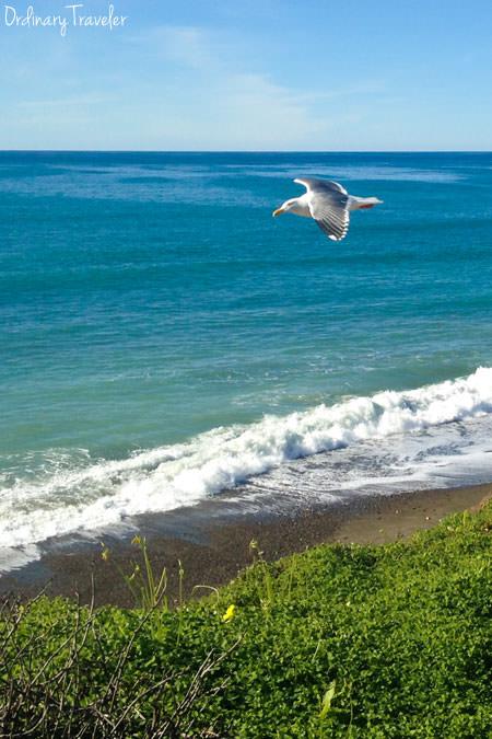 Cambria California Beaches