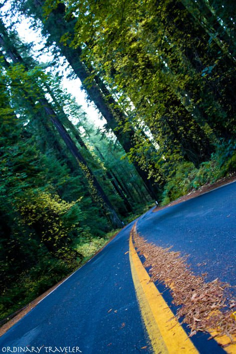 California Camping Humboldt State Park Avenue of the Giants