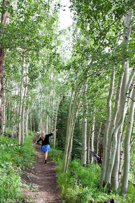 Telluride Colorado Hiking in Aspen Trees