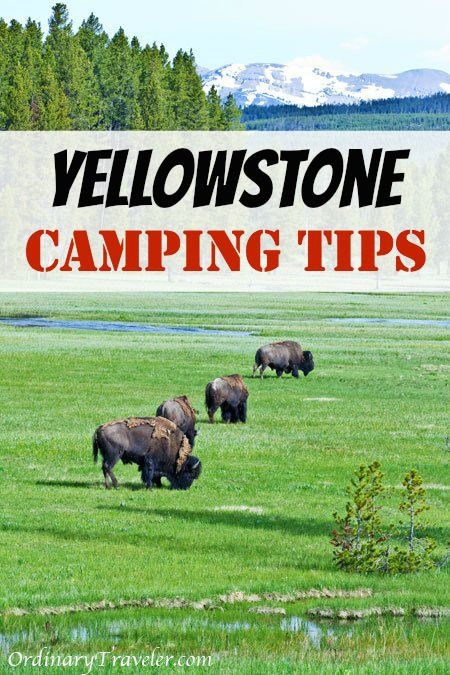 Everything You Need to Know for Camping in Yellowstone National Park