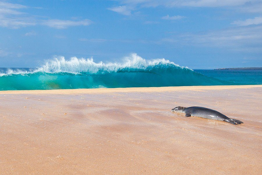 Top Places to Go in Hawaii