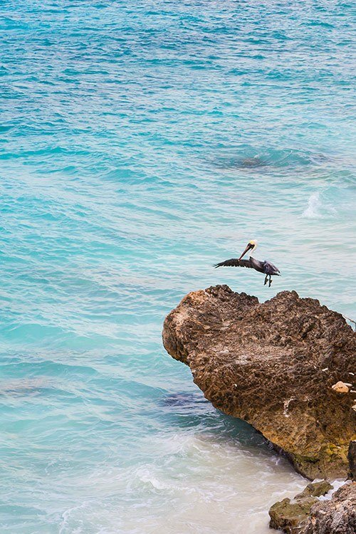 The Best Time to Visit Bonaire
