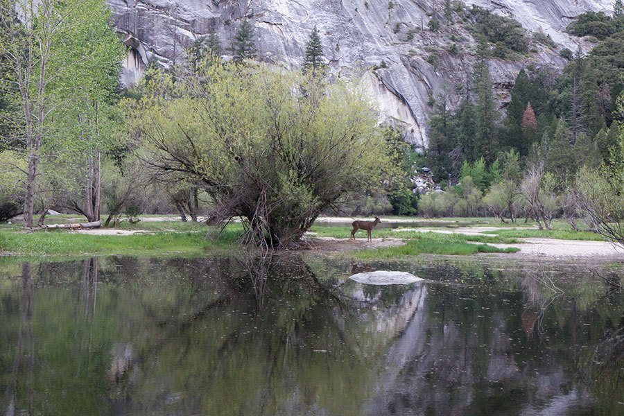 Mirror Lake Trail - Yosemite National Park