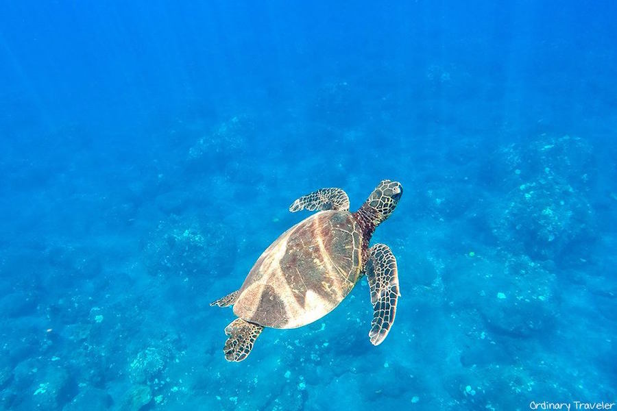 How to Choose the Best Hawaiian Island for Your Vacation
