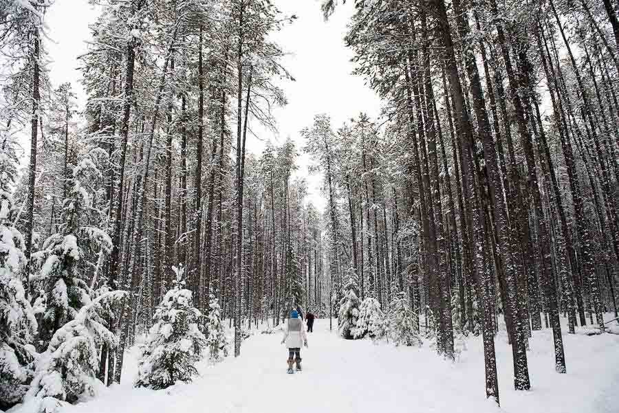 5 Ways to Connect With Nature in Montana This Winter