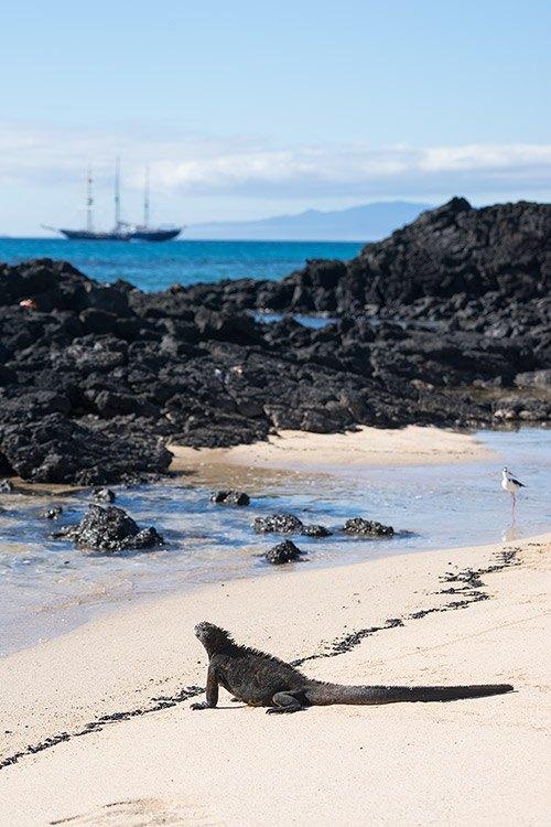 Cerro Dragon - Santa Cruz Island in Galapagos