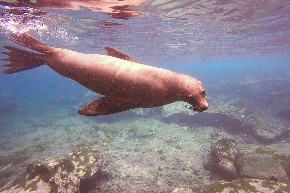 Cruising the Galapagos Islands with Andando Tours