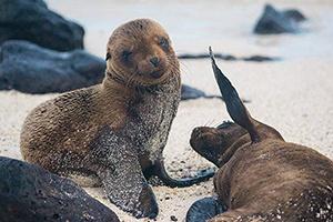 Galapagos Islands Travel Video