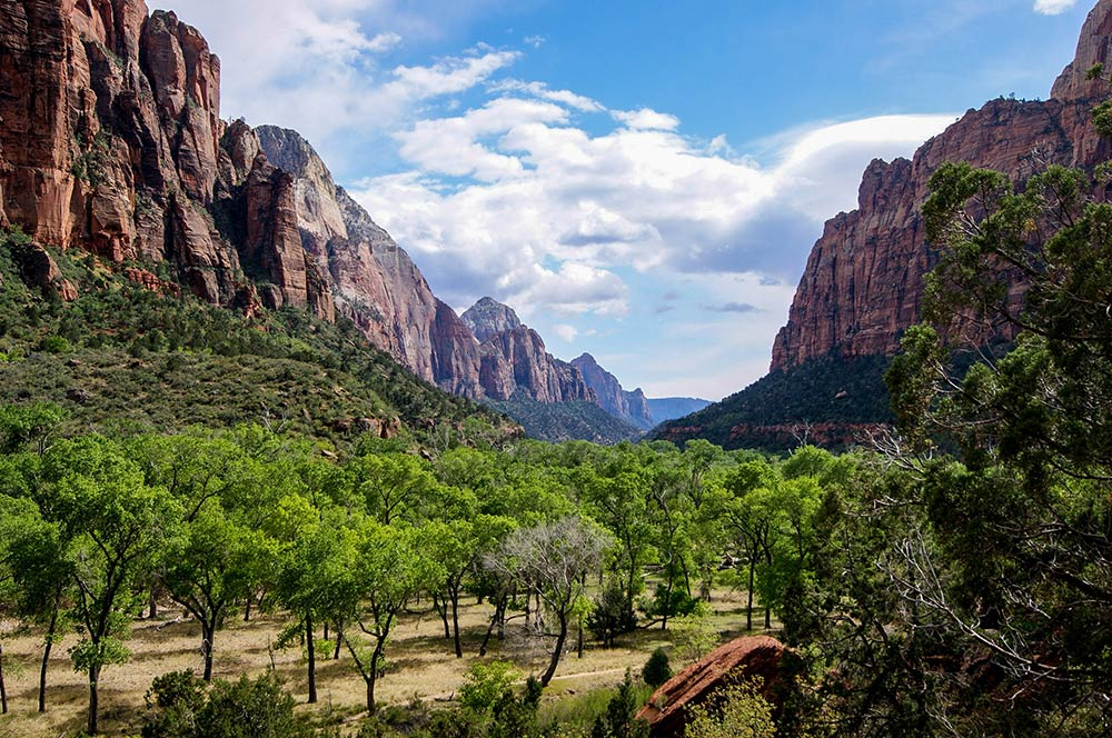 Best Campgrounds in Zion National Park